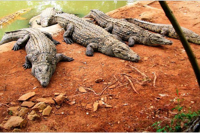 Croc Farm, Antananarivo, Madagascar