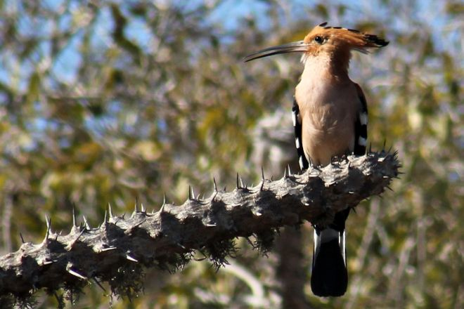 Eco Parc Reniala, Mahajanga, Madagascar