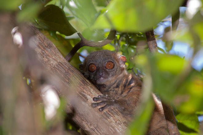 Lokobe Nature Special Reserve, Nosy Be, Madagascar