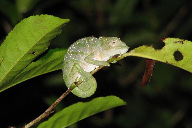 The Mitsinjo Reserve, Andasibe, Madagascar