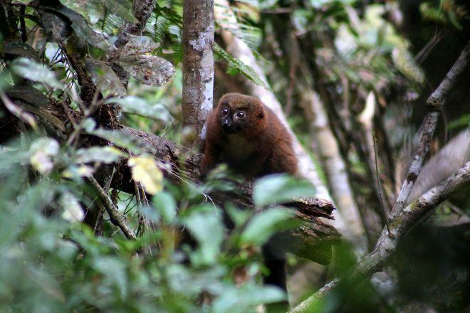 V.O.I.M.M.A. Community Reserve, Andasibe, Madagascar