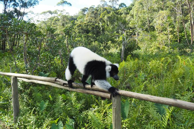 Vakona Private Reserve, Andasibe, Madagascar