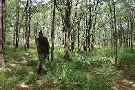 Mwabvi Game Reserve