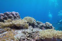 Aquarius Redang Dive Centre