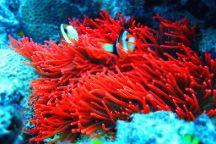 Borneo Speedy Dive