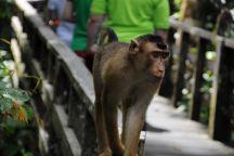 Sepilok Tropical Wildlife Adventure, Sandakan, Malaysia
