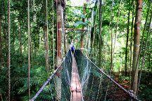 Taman Negara Canopy Walkway, Taman Negara National Park, Malaysia