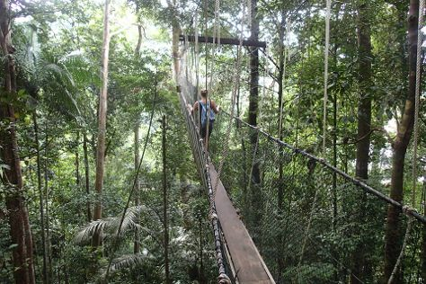 Canopy Walk, Wilayah Persekutuan, Malaysia