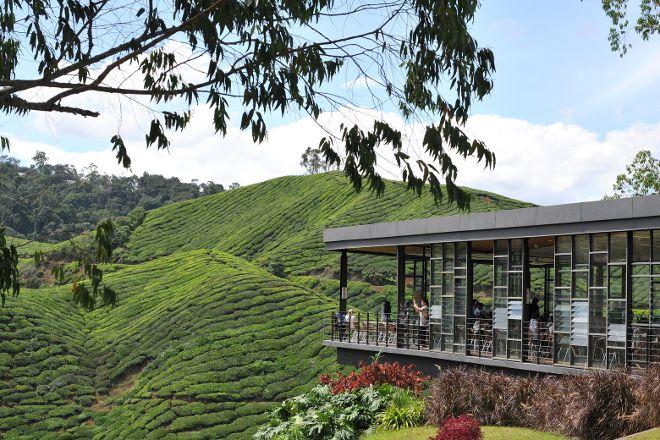 Boh's Tea Centre, Cameron Highlands, Malaysia