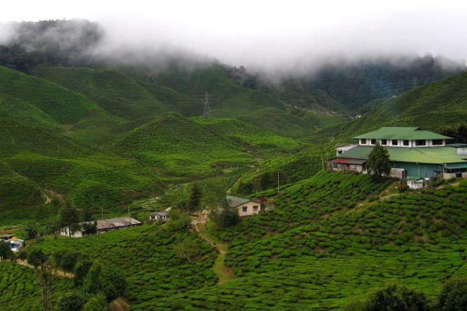 Cameron Bharat Tea Estate, Tanah Rata, Malaysia
