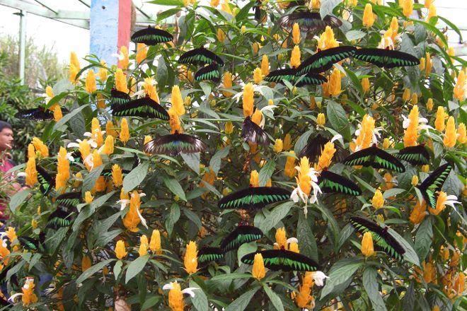 Cameron Highlands Butterfly Garden, Cameron Highlands, Malaysia