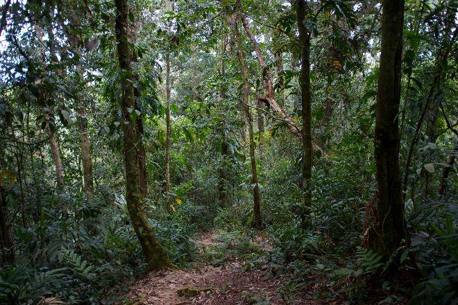Cameron Highlands Jungle Trail No. 1, Brinchang, Malaysia
