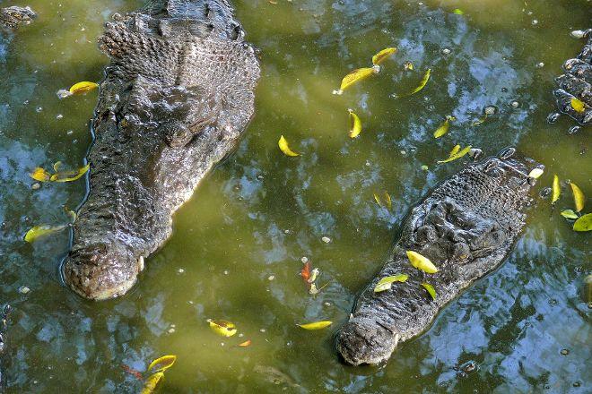 Crocodile Farm, Miri, Malaysia