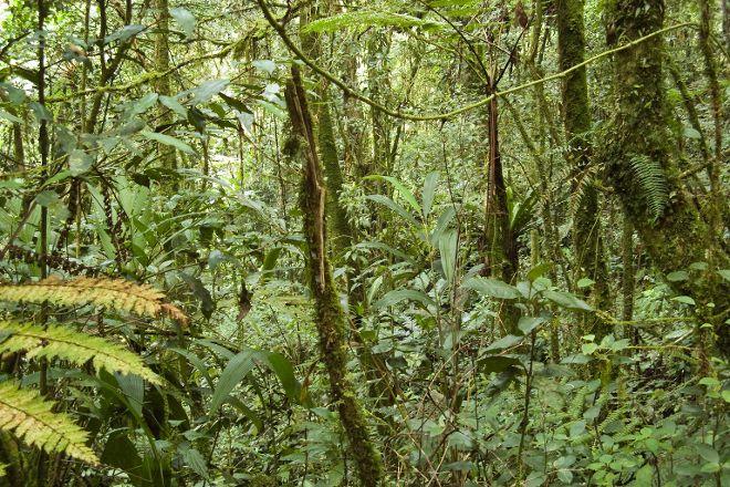 Gunung Berincang, Cameron Highlands, Malaysia