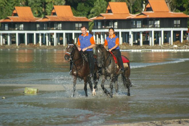 Island Horses, Langkawi, Malaysia