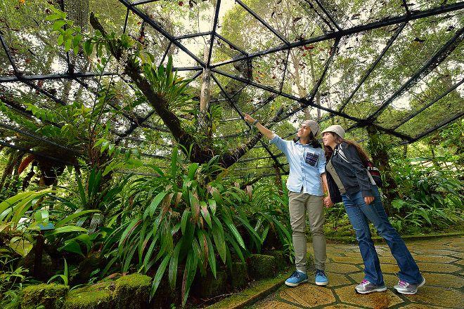 Kinabalu Park, Sabah, Malaysia