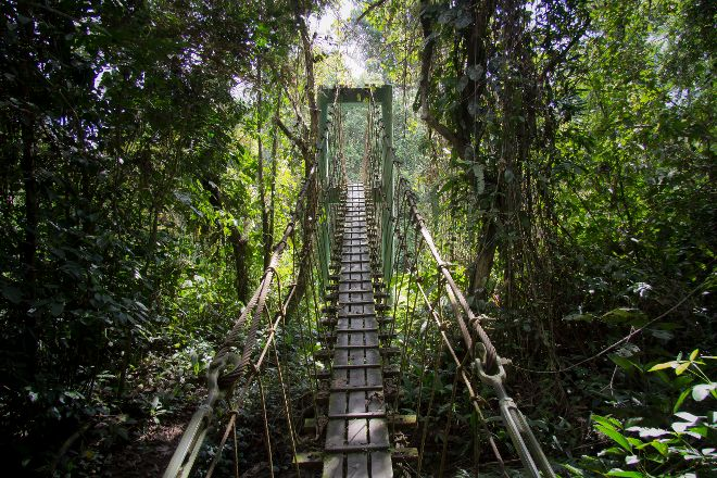 Mulu Skywalk, Gunung Mulu National Park, Malaysia