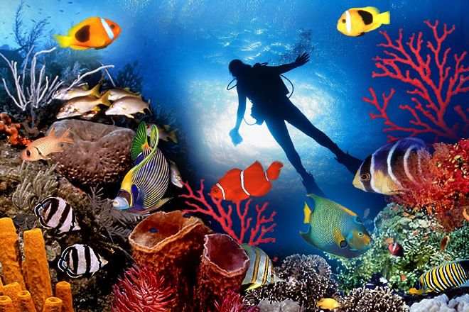 Best Dives Maldives, Male, Maldives
