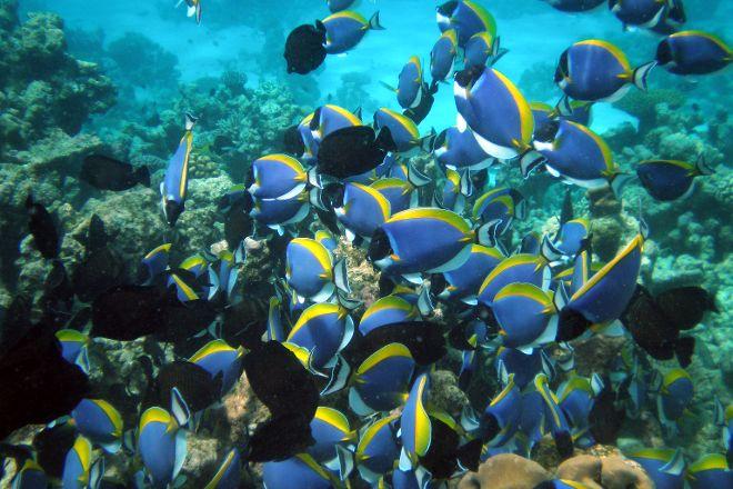 HP Reef, Furanafushi Island, Maldives