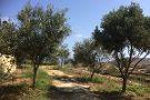Tal-Massar Winery
