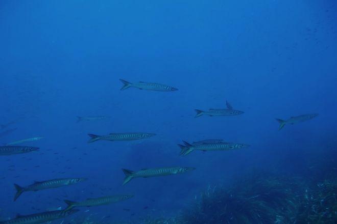 Corsair Diving Malta, Bugibba, Malta