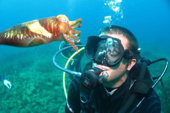 Dive Systems, Sliema, Malta