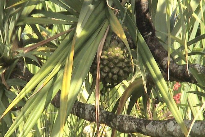 Le Paradis du Bakwa, Le Francois, Martinique