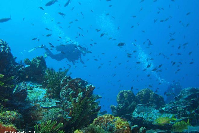 Plongee Immersion Caraibes, Le Marin, Martinique
