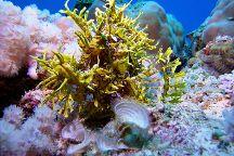 Ocean Spirit Dive Center, Pereybere, Mauritius