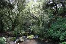 Parque Nacional Barranca del Cupatitzio