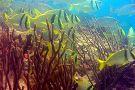 Scuba Playa Dive Shop