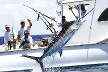 Cabo Playa Sport Fishing