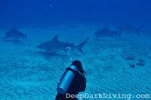 Deep Dark Diving, Playa del Carmen, Mexico