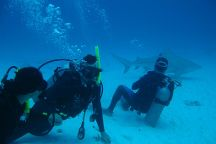 Dressel Divers, Playa del Carmen, Mexico
