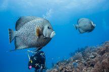 Mar Adentro Diving, Mahahual, Mexico