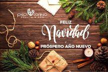 Piedi Carino Healing Pedicure & Spa