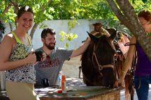Rancho Baaxal horse riding, Playa del Carmen, Mexico