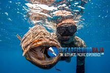 Spearfishing Baja