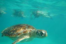 Tulum Diving & Travel, Tulum, Mexico