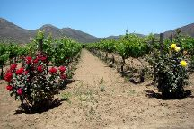 Valley Girl Wine Tours, Ensenada, Mexico