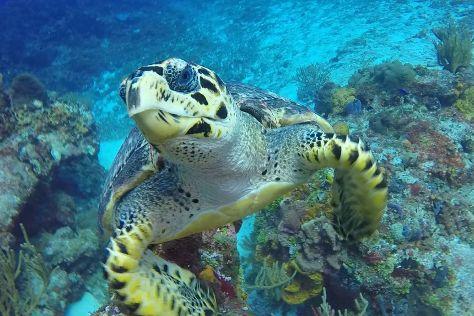 Palancar Reef, Cozumel, Mexico