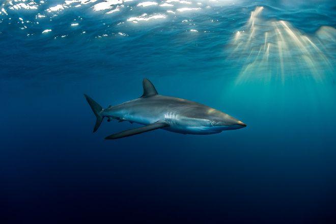 Baja Shark Experience, Cabo San Lucas, Mexico