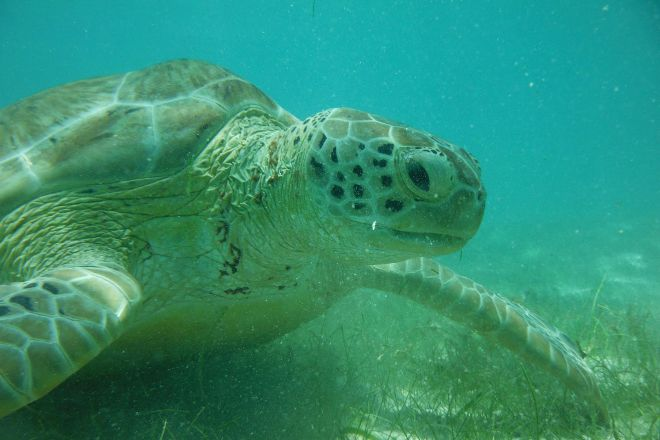 Betina Tours - One Day Private Tours, Playa del Carmen, Mexico