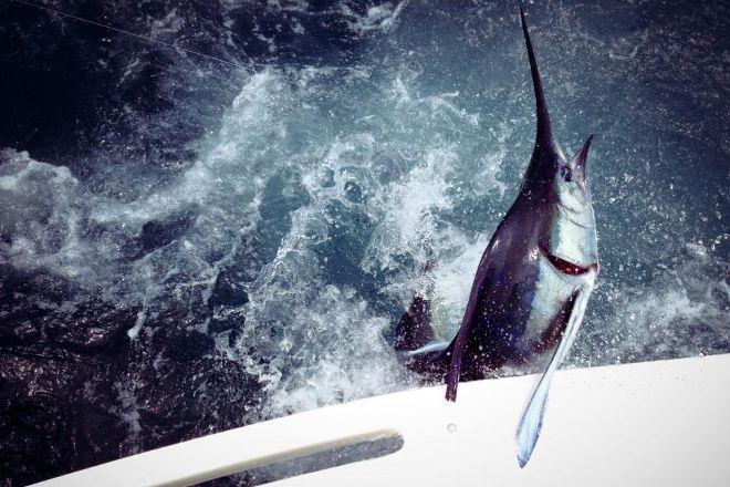 Cabo San Lucas Sportfishing, Cabo San Lucas, Mexico