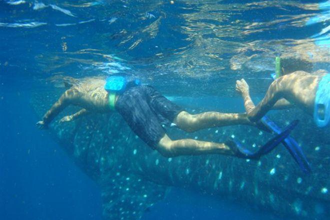 Cancun Whale Shark Tours, Cancun, Mexico