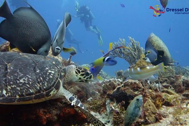 Dressel Divers, Cozumel, Mexico