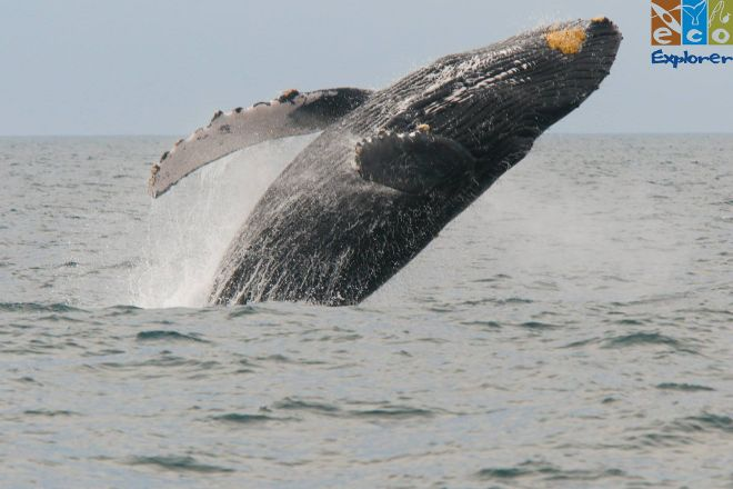 Eco Explorer Whale Watching, Puerto Vallarta, Mexico