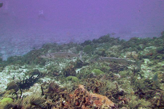 El Paso del Cedral Reef, Cozumel, Mexico