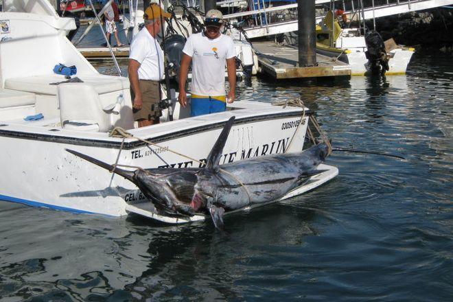 Fin Addict Sportfishing, Cabo San Lucas, Mexico