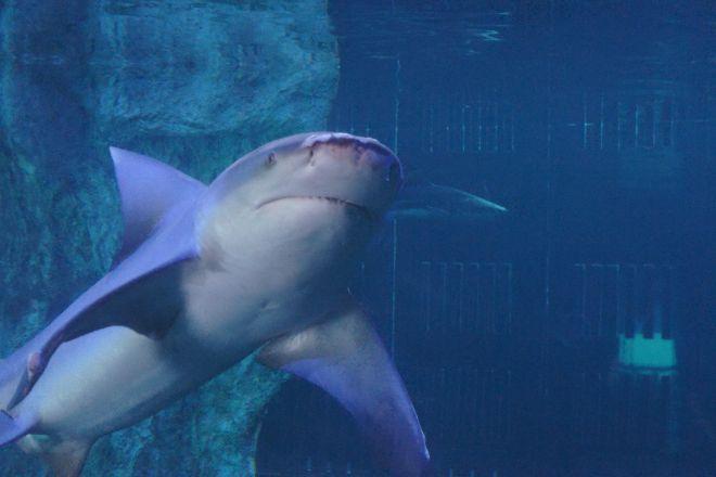 Interactive Aquarium, Cancun, Mexico
